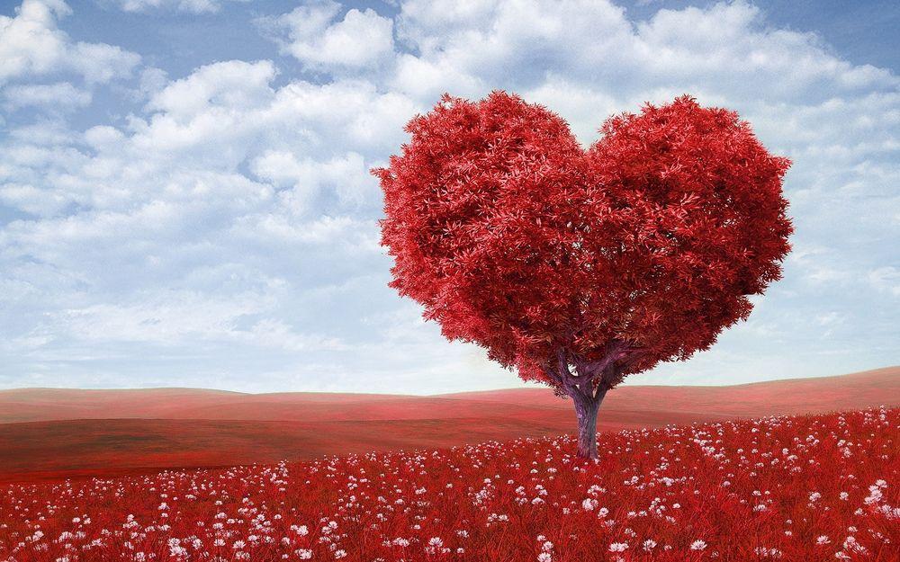 Kalp sağlığı ve natürel sızma zeytinyağı