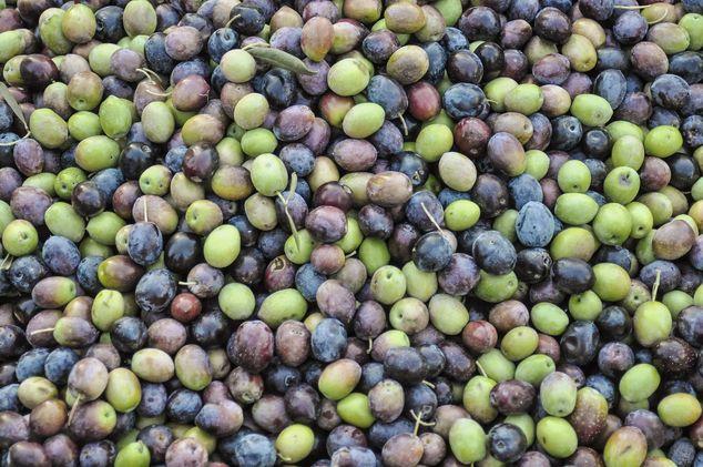 Sıkma Yöntemlerine Göre Zeytinyağı Çeşitleri | Taş Baskı - Soğuk Sıkım - Kontinü Sistemler