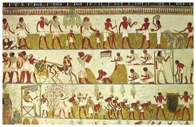 Zeytin ağacının izlerine Mısır piramitlerinde de rastlanır.